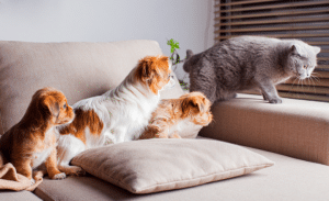 Pets and Air Filter